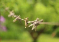 Pinnen op het koord stock foto