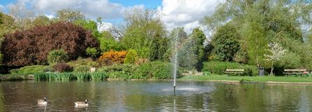Pinner Memorial Park, UK. Photo shows lake with fountain, birds, ducks, geese, trees and green foliage. Pinner Memorial Park, Pinner, Middlesex, UK. Panoramic stock image