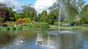 Pinner Memorial Park, UK Fotoet visar sjön med springbrunnen, fåglar, änder, gäss, träd och grön lövverk arkivbilder
