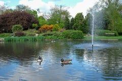 Pinner Memorial Park, UK Fotoet visar sjön med springbrunnen, fåglar, änder, gäss, träd och grön lövverk arkivbild
