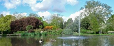 Pinner Memorial Park, UK. Photo shows lake with fountain, birds, ducks, geese, trees and green foliage. Pinner Memorial Park, Pinner, Middlesex, UK. Panoramic stock images
