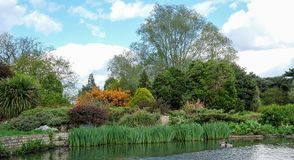 Pinner Memorial Park, UK. Photo shows lake, trees and green foliage. Pinner Memorial Park, Pinner, Middlesex, UK. Photo taken on a sunny partially cloudy spring stock images