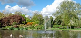 Pinner Memorial Park, UK. Photo shows lake with water fountain, birds, ducks, geese, trees and green foliage. Pinner Memorial Park, Pinner, Middlesex, UK Stock Images