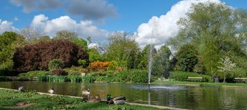 Pinner Memorial Park, UK. Photo shows lake with water fountain, birds, ducks, geese, trees and green foliage. Pinner Memorial Park, Pinner, Middlesex, UK Royalty Free Stock Photo