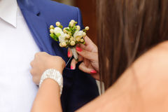 Pinning Boutonniere Royalty Free Stock Images