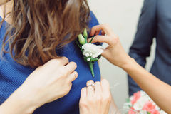Pinning Boutonniere on Dress Royalty Free Stock Photography