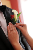 Pinning boutonniere Royalty Free Stock Image