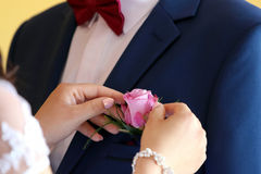 Pinning boutonniere flowers to the groom Royalty Free Stock Image