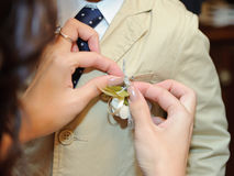 Pinning Boutonnierre Royalty Free Stock Photos