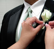 Pinning flower on groom. Getting ready for the big day royalty free stock images