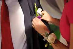 Pinning Rose Boutonniere Stock Photo