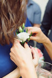 Pinning White Boutonniere Royalty Free Stock Image