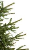 Pino-árbol Imágenes de archivo libres de regalías