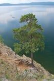 Pino-árbol en el precipicio Imágenes de archivo libres de regalías