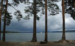 Pino-alberi su una priorità bassa un lago fotografie stock libere da diritti