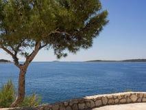 Pino alla costa del mare adriatico, con copyspace Fotografia Stock Libera da Diritti