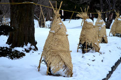 Pino avvolto con la stuoia e la corda del tessuto per protezione della neve Immagine Stock