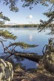 Pino caido en el lago Garten en Escocia Imágenes de archivo libres de regalías