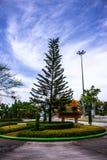 Pino con el cielo azul Fotografía de archivo libre de regalías