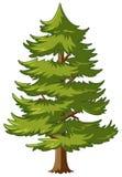 Pino con le foglie verdi royalty illustrazione gratis