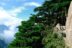 Pino de Huangshan del soporte, China increíble Foto de archivo