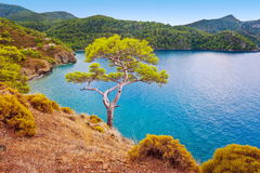 Pino de la costa de mar Fethiye Turquía Foto de archivo