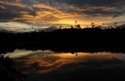 Pino de la puesta del sol imagen de archivo libre de regalías
