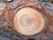 Pino de madera del fondo Fotos de archivo