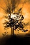 Pino del árbol forestal de la niebla de Misty Tree Sunlight Sun Beams imágenes de archivo libres de regalías