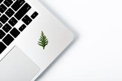 Pino del nuovo anno che mette su computer portatile Spazio per il vostro testo Fotografie Stock