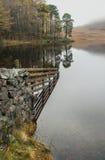 Pino della Regione dei laghi Fotografie Stock Libere da Diritti