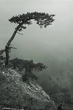 pino di montagne sole Immagine Stock