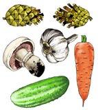 Pino di pinecone della carota dell'asparago dell'aglio del fungo prataiolo del fungo del disegno Fotografia Stock