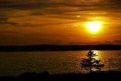 Pino di tramonto Immagine Stock Libera da Diritti