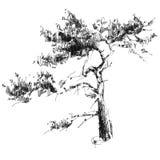 pino disegnato a mano di vettore Fotografia Stock