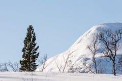 Pino, betulla, montagne e un cielo blu Fotografie Stock