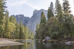 Pino e fiume Fotografie Stock Libere da Diritti