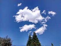 Pino ed il cielo blu fotografie stock