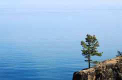 Pino en el acantilado del Baikal Foto de archivo libre de regalías