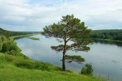 Pino en el alto banco del río Tom Imágenes de archivo libres de regalías