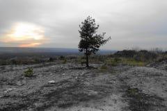 Pino en la colina de la tiza fotos de archivo