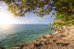 Pino en la orilla del mar azul Croacia Fotos de archivo libres de regalías