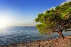 Pino en la orilla del mar azul Croacia Imagen de archivo