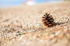 Pino en la playa Foto de archivo libre de regalías