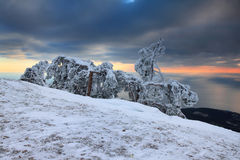 Pino en nieve en la tapa de la montaña Imagenes de archivo