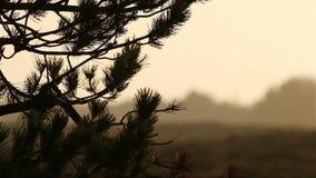 Pino en puesta del sol en el romo, Dinamarca delante de la tierra almacen de video