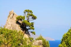 Pino en roca contra el mar Imagenes de archivo