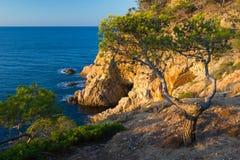 Pino en un acantilado. Costa Brava. Fotos de archivo libres de regalías