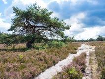Pino en una pista de senderismo en la tierra Imagen de archivo