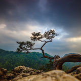 Pino famoso alla cima, Polonia fotografia stock libera da diritti